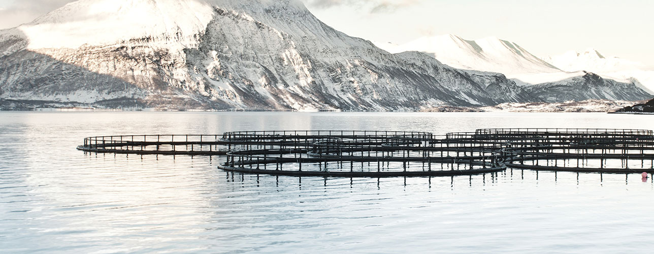 Fish Farm in North of Norway
