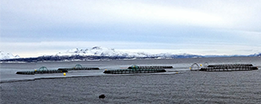 Fish farm with snowy mountains in the background